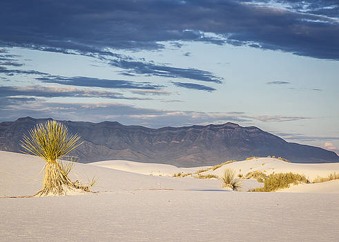 Morning Glow at White Sands by Focus On Nature Photography