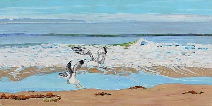 Morning Gulls by Pamela Trueblood