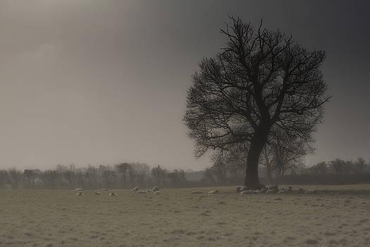Stewart Scott - Morning Haze