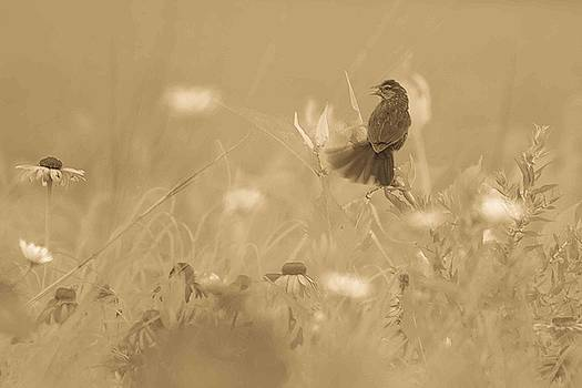 Morning in the Meadow #2 in Sepia by Maria Suhr
