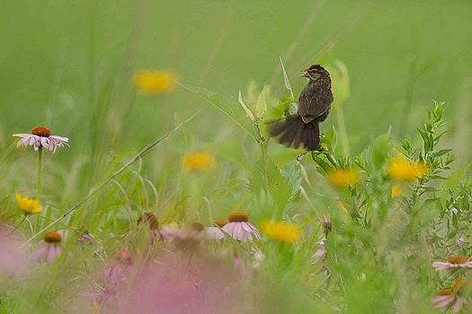 Morning in the Meadow #2 by Maria Suhr