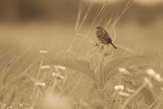 Morning in the Meadow #3 in Sepia by Maria Suhr