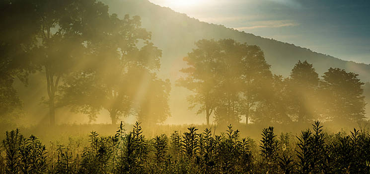 Morning Light by Eric Albright