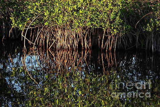 Bob Phillips - Morning Light Mangrove Reflection
