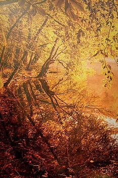 Morning Light by Okan YILMAZ