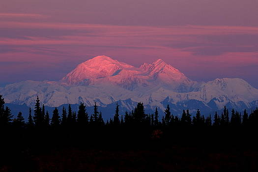 Morning Light On Denali by Steve Wolfe