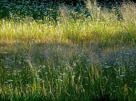 Morning light on Grant Meadow by Amelia Racca