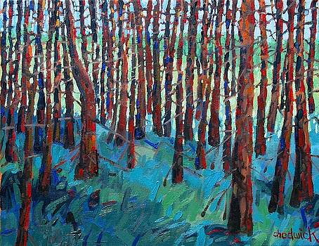 Morning Light Piney Woods by Phil Chadwick