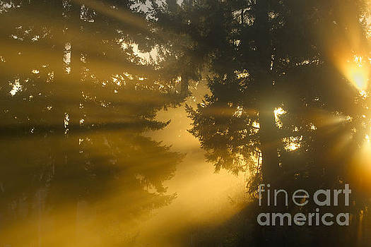 Morning Light by Rod Giffels
