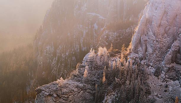Morning light by Toma Bonciu