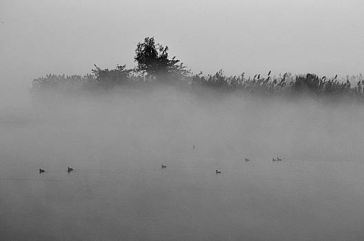 Manjot Singh Sachdeva - Morning Mist At Wetland Of Harike