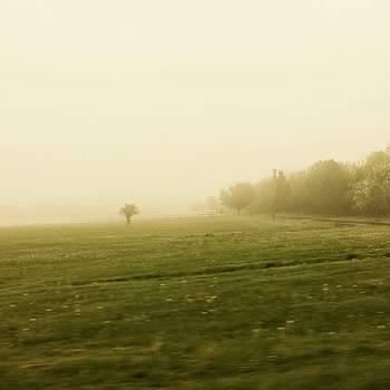 Morning Mist by David Oakill