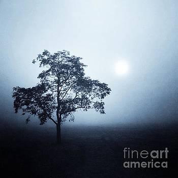 Morning Mist by John Edwards