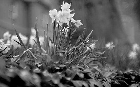 Morning Mist by Lens Artist