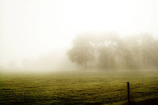 Morning mist by Playfulfoodie