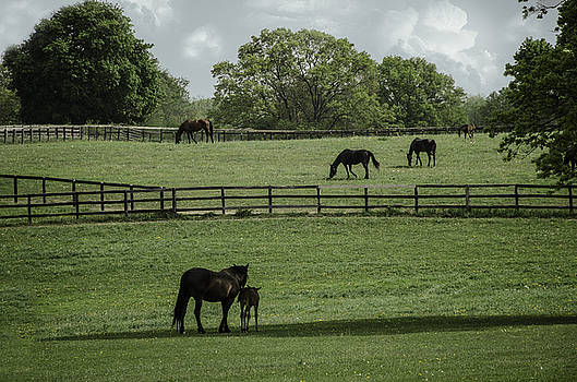 Morning on the Farm by Eleanor Bortnick