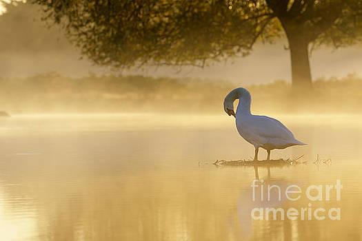 Morning Preen by Paul Farnfield