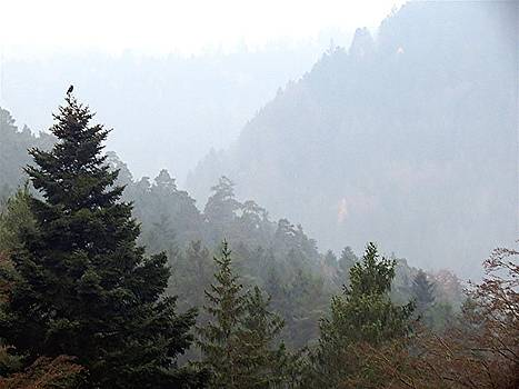 Morning Schwarzwald by Barron Holland