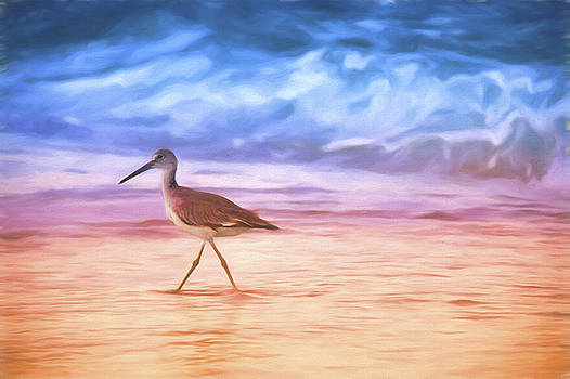 Morning Sandpiper by Daphne Sampson
