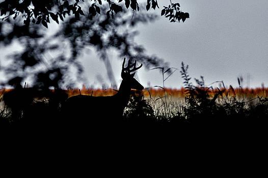 Morning Silhouette  by Garett Gabriel
