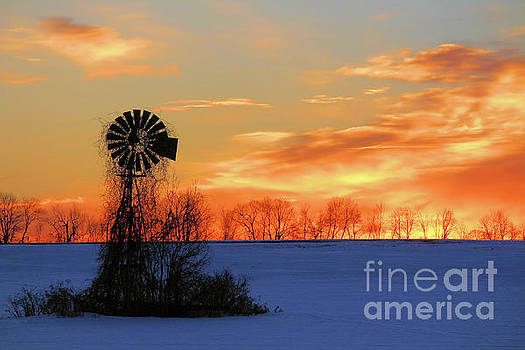 Morning Silhouette by Kristi Beers-Mason