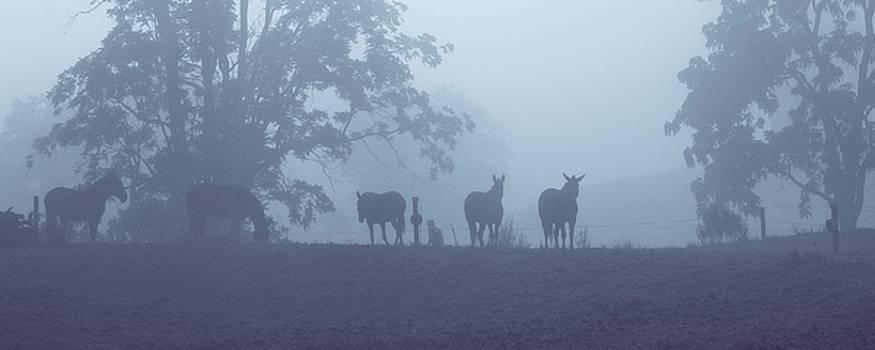 Morning Silhouettes by Stephanie Calhoun