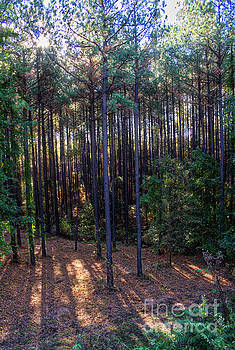 Morning Sun 1, Sumter National Forest by Gregory Schultz