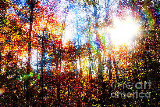 Morning Sun 2, Sumter National Forest, Multiple Exposure by Gregory Schultz