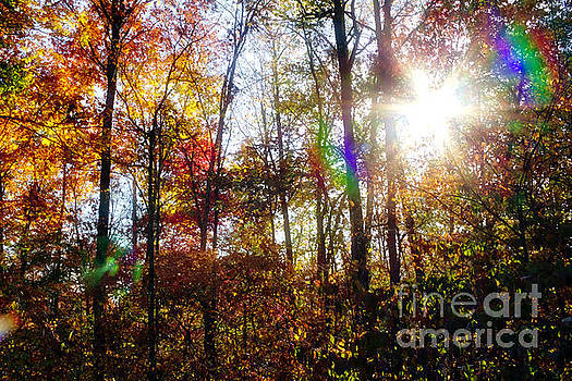 Morning Sun 3, Sumter National Forest by Gregory Schultz
