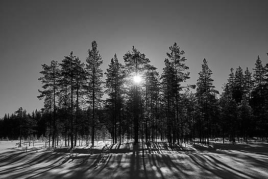 Morning sun bw by Jouko Lehto
