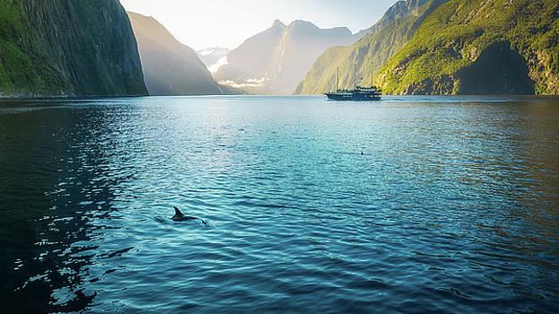 Morning sun glow and dolphins at Milford Sound by Daniela Constantinescu