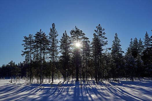 Morning sun by Jouko Lehto