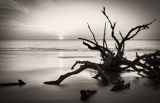 Morning Sun On Driftwood Beach in Black and White by Chrystal Mimbs