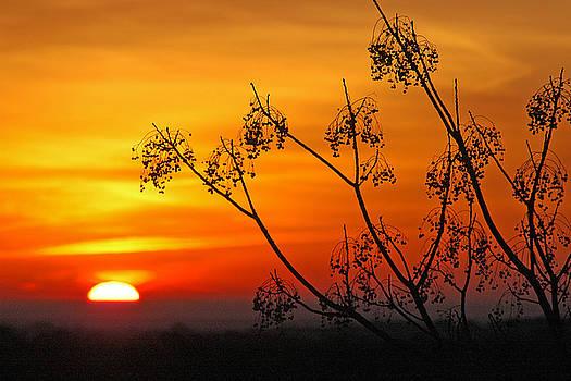 Robert Anschutz - Morning Sun