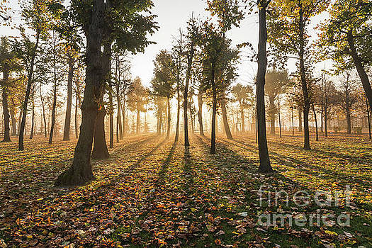 Morning sunrise and light in the autumn by Travel and Destinations - By Mike Clegg