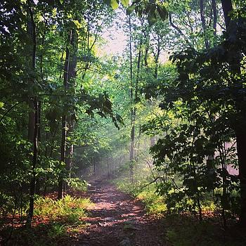 Morning Sunshine on the Appalachian Trail by William Sullivan