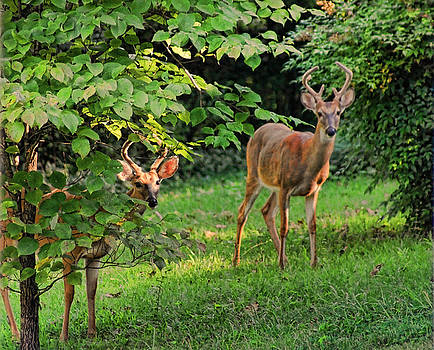 Morning Visitors by Rick Friedle