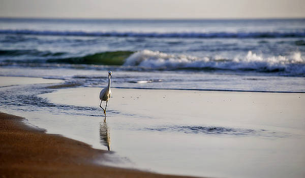 Morning Walk At Ormond Beach by Steven Sparks