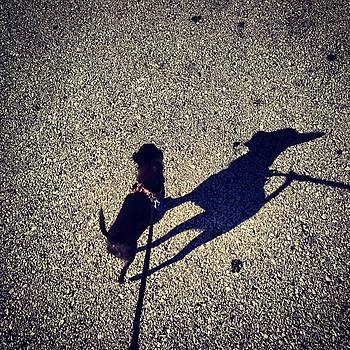 Morning Walk by Kristen  Mills