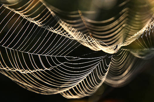 Morning Web by Jan Piller
