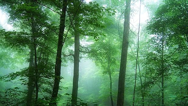 Morning Woods by David Carvell