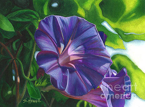 Morning's Glory by Sandi Howell