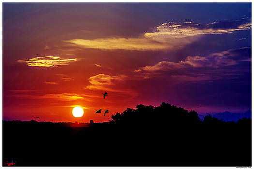 Morning Silhouette by Rogermike Wilson
