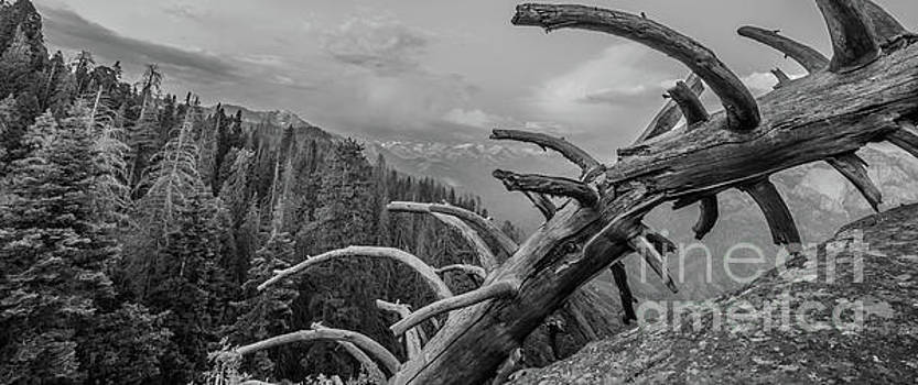 Michael Tidwell - Moro Rock in Monochrome