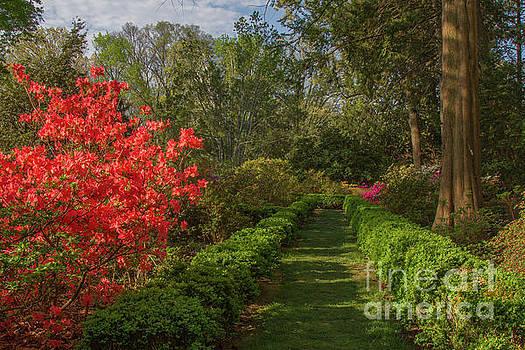 Morrison Garden 1 by Chris Scroggins