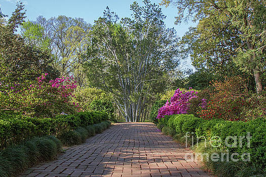 Morrison Garden 3 by Chris Scroggins