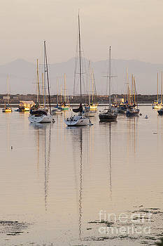 Morro Bay Boats in Early Morning Light   by Sharon Foelz