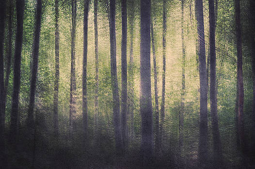 Mortwood Forest by Violet Gray