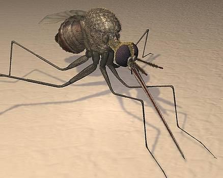 Mosquito by Giora Eshkol