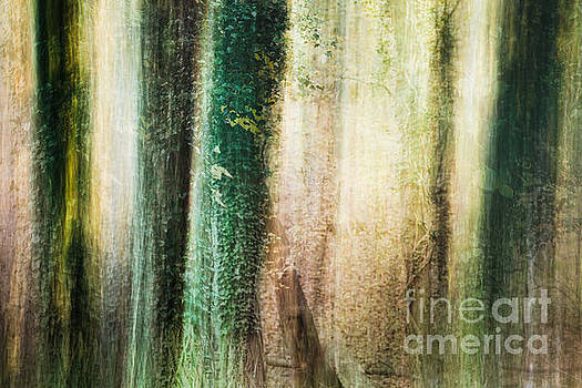Moss and Ivy by Lisa McStamp